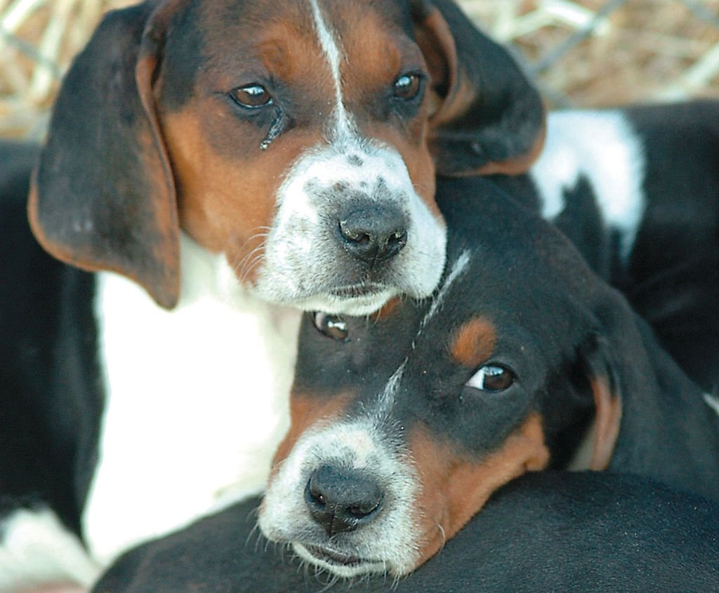 Exchange Club starts coon dog event | News | albanyherald.com