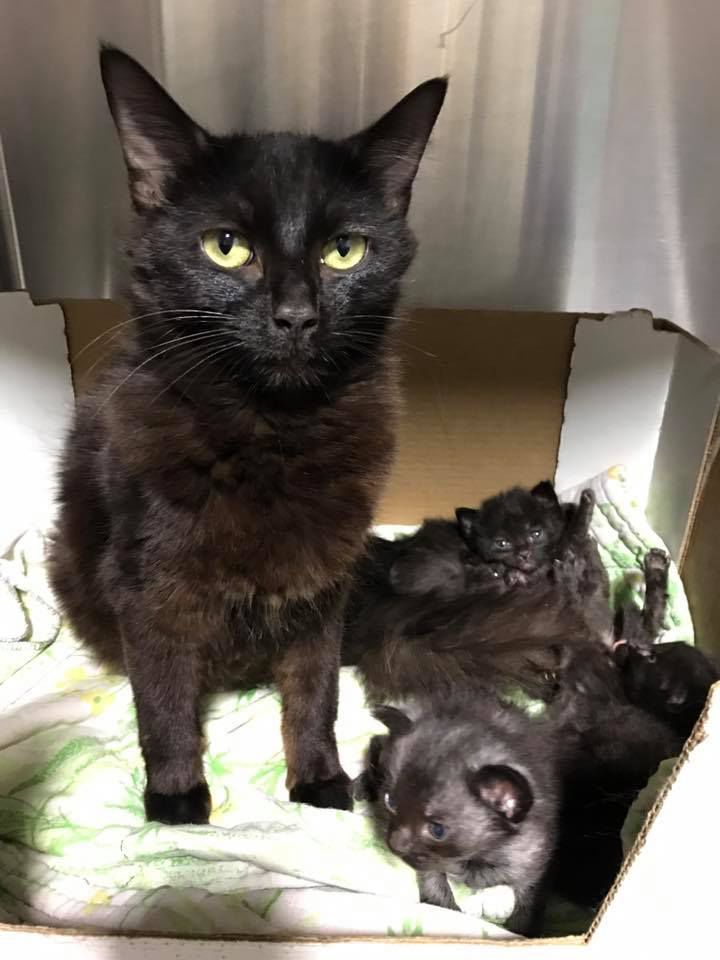 County shelter cats