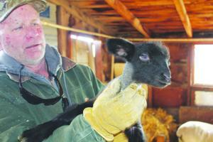 Wyoming wool