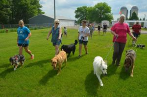 Parading pets will benefit local animal shelter
