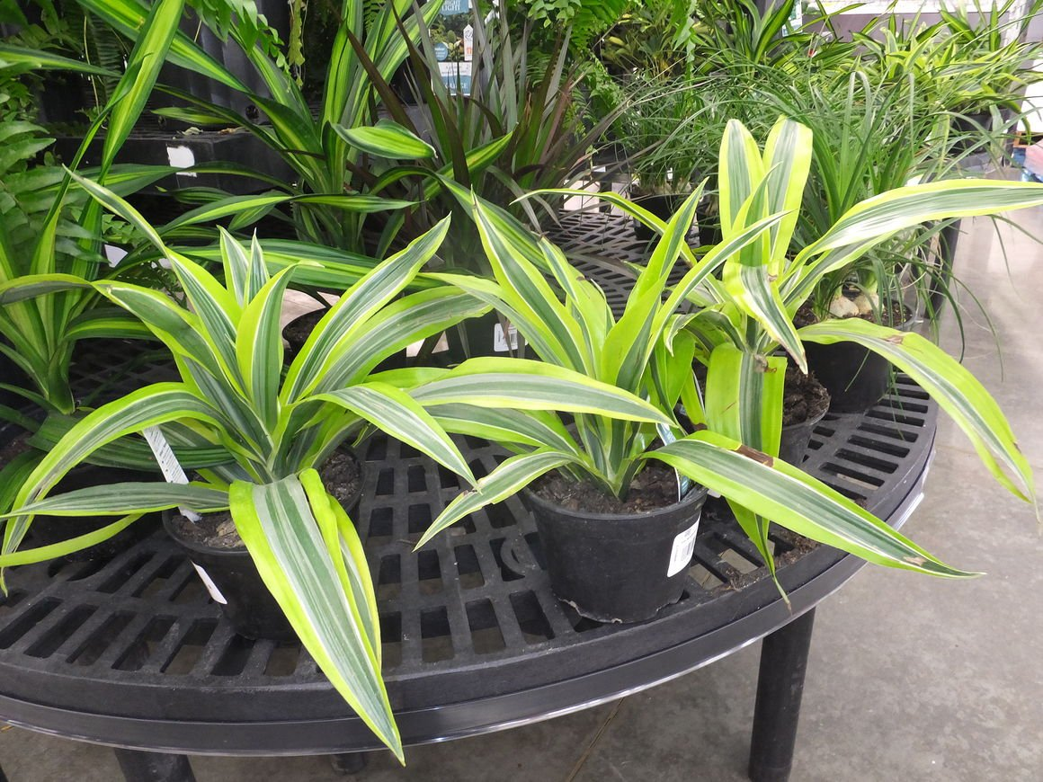 Add Color To Your Garden With Tropical Plants Home