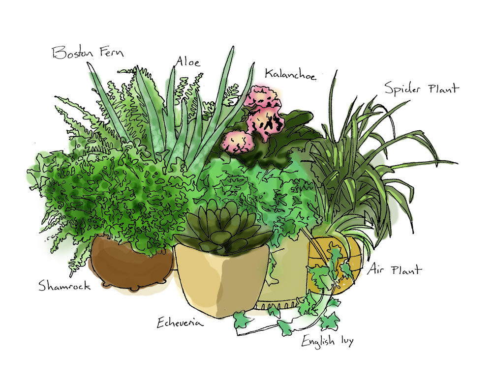 8 easy to care for plants that bring life to any room for Easy plants to care for