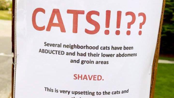 Bizarre cases of 'cat shaving' strike Waynesboro neighborhood