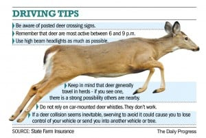 It's deer (vs. car) season once again