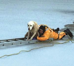 "<p style=""text-align: left;"" align=""right"">LOW Fire and Rescue firefighter Aaron Lovell rescues a yellow lab that had fallen into an ice-covered pond in eastern Orange County Tuesday morning. The dog is expected to make a full recovery.</p>"