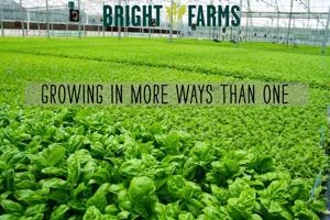<p>New York-based BrightFarms is investing $7.35 million on a greenhouse project in Culpeper, its first in Virginia.</p>