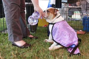 All-Breed Dog Show