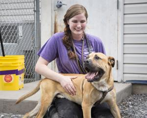 <p>Moriah Good with SVASC rubs Muddy while allowing him to exercise outside Tuesday afternoon in Lyndhurst.</p>