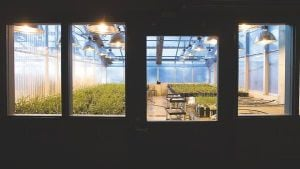 Turning over a new leaf with greenhouses