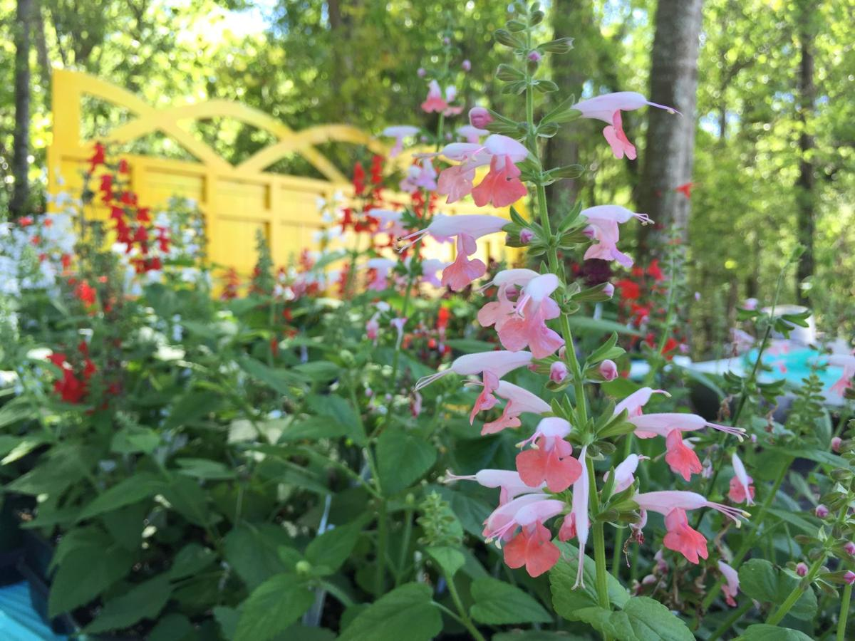 Wiregrass Master Gardeners Plant Sale Featured