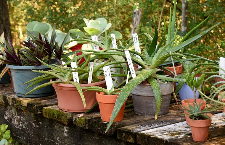 Wiregrass Master Gardeners Fall Plant Sale Set For Oct 8 Dothan Eagle Local