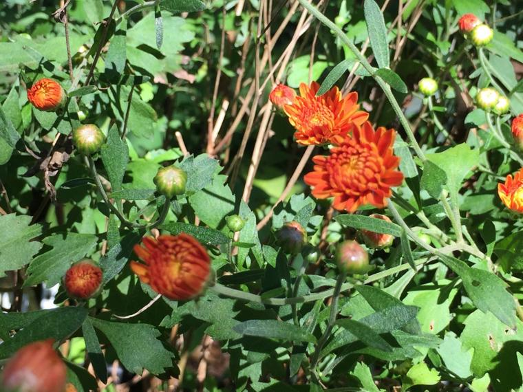 Wiregrass Master Gardeners 2016 Fall Plant Sale Dothan Eagle Featured