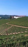 ITALY 7. Vineyards in Barbaresco