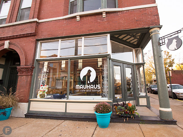 Cat Cafe In Maplewood Mo