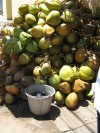 A stack of tender coconuts