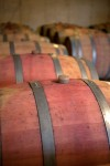 Red wines aging in oak barrels