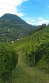 ITALY 15. The Vineyards in Bolzano