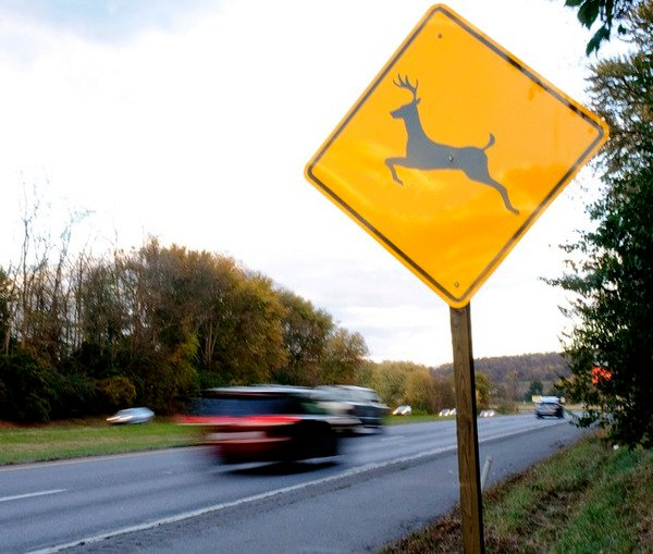 Deer Pose Frederick County Road Hazard Vehicular