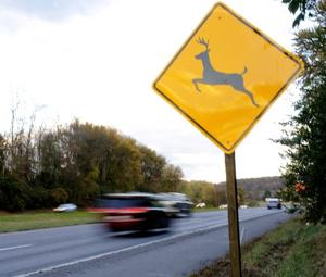 Deer mating season poses road hazard
