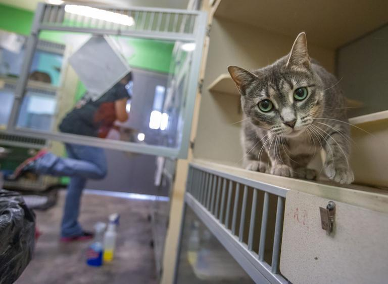 Weekend adopt-a-thon seeks to place 300 shelter animals