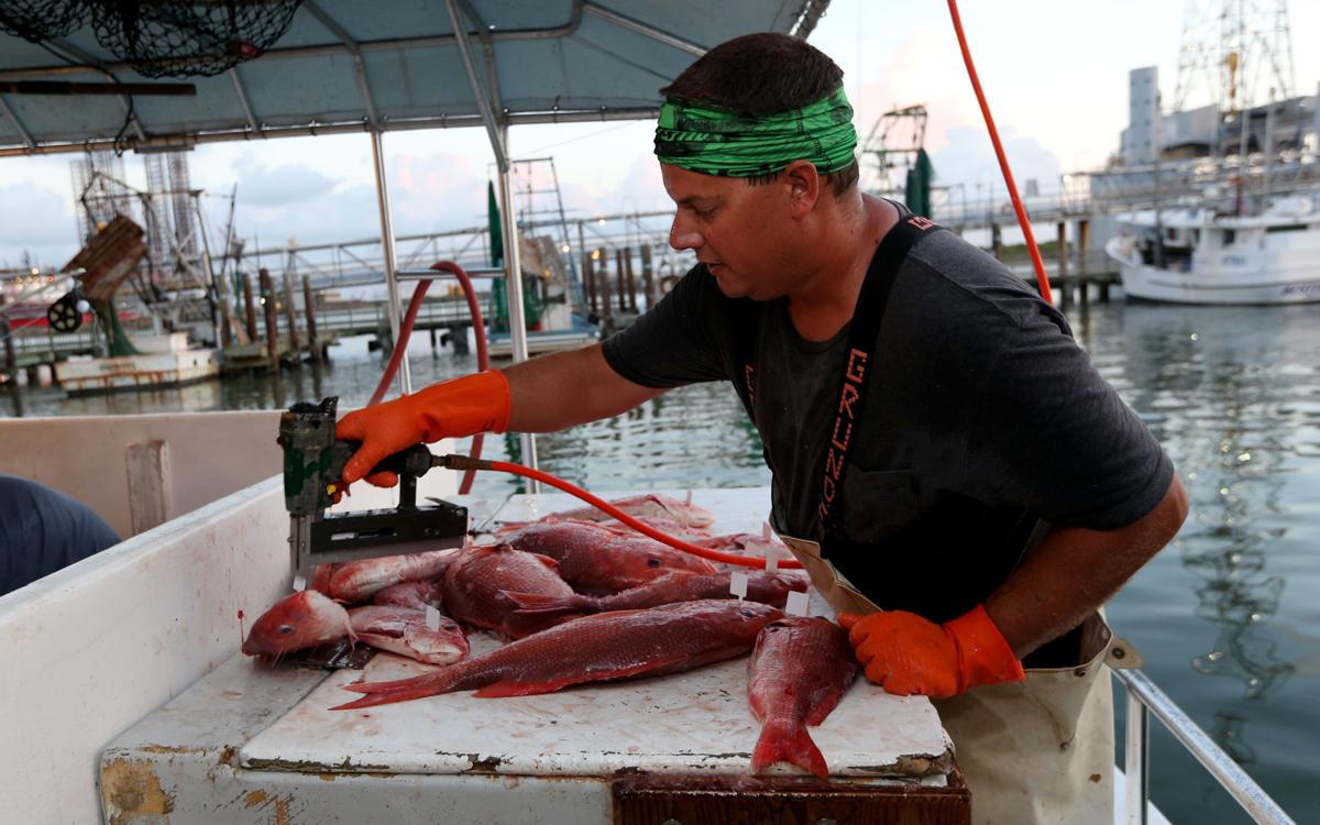 Recreational commercial anglers divided on red snapper for Galveston fish market