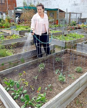 Volunteers feed county through community gardens