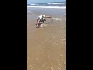 Shark caught in surf at Bolivar Peninsula