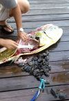 A Dorado full of Kemp's ridley sea turtles