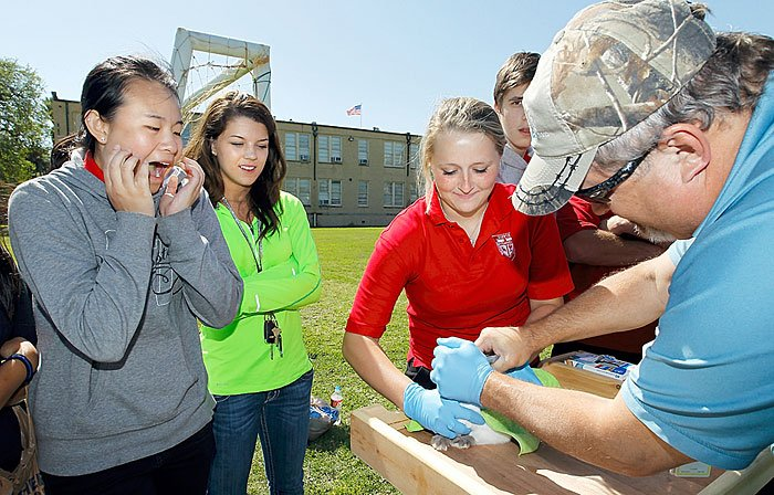 Buccaneers' 4-H club shows rabbits at fair