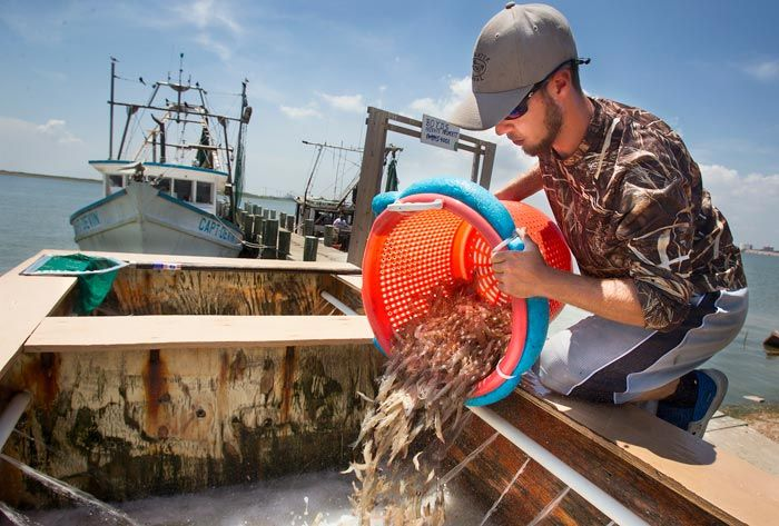 Urbanization pollution putting health of galveston bay at for Texas city dike fishing