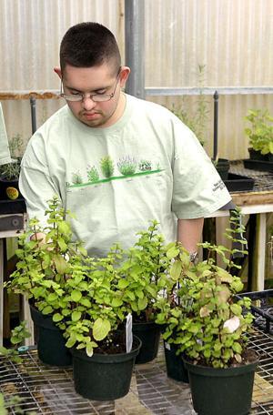 Sunshine Center's plant sale puts more greens on plates