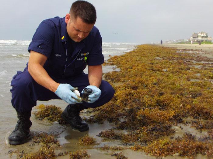 Oil detected on isle beach