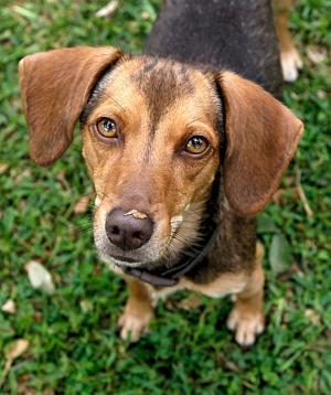Humane Society adoptions