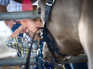 GCF Youth Livestock Auction