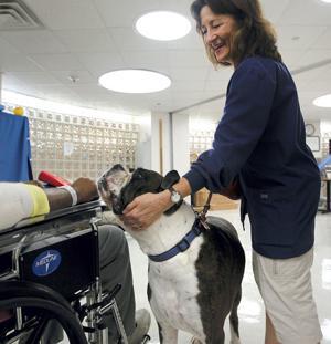 Dogs help brighten children's stay in hospital