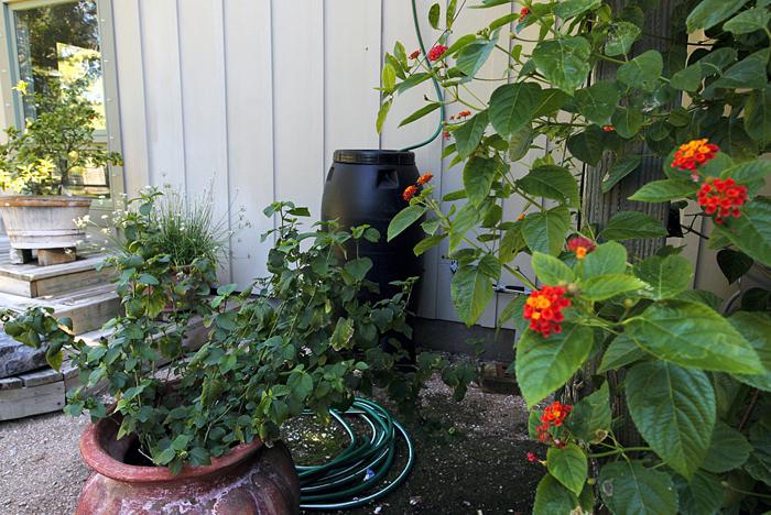 Garden gone wild