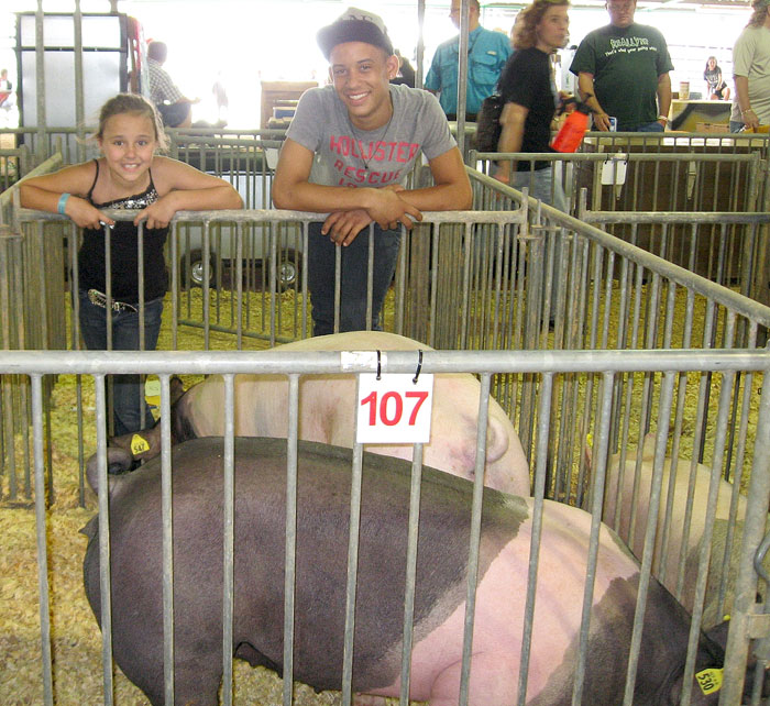 FFA members compete side by side with pigs