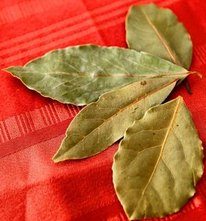 Aromatic herb