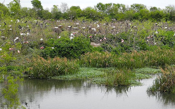 High Island's rookery a must-see for birders