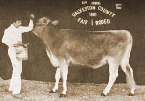 1981 Grand Champion Dairy Heifer