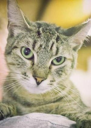 Bayou Animal Services pets of the week