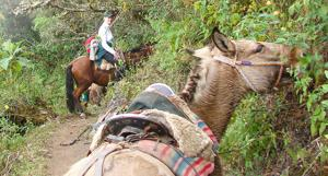 Family travels across Peru by foot, mule