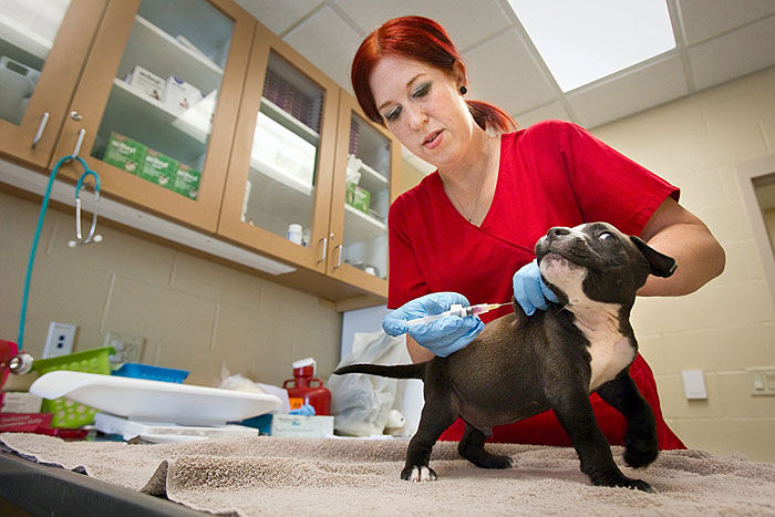 Galveston County Animal Resource Center