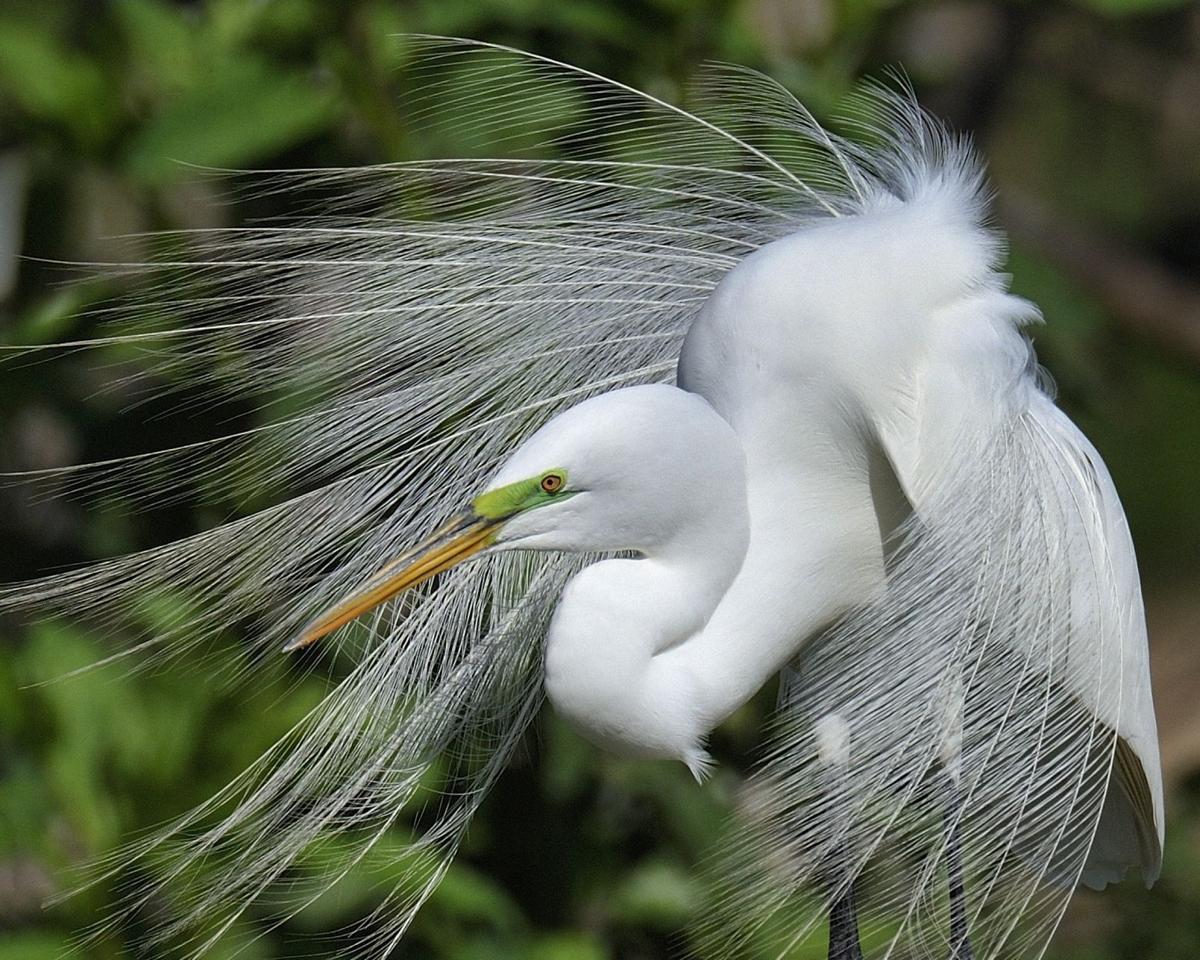 FeatherFest Photo Contest winners
