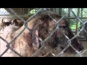 Animals Seized In Santa Fe Texas