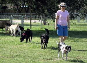 Dog Park social scene