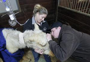 Under a vet's care