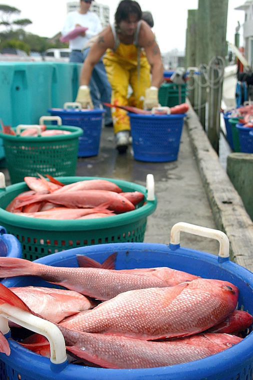 Judge: Feds not enforcing limits on red snapper