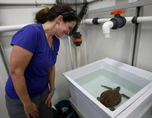 Stunned turtles recovering from cold weather across Texas