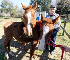 Pair of rescued horses